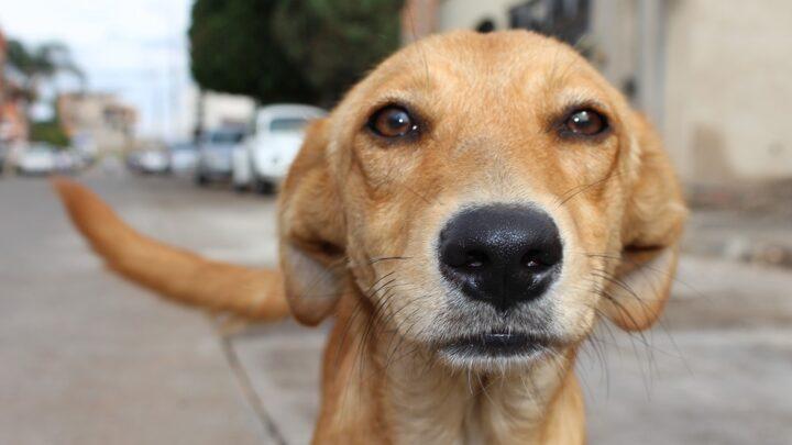 Multa de R$ 20 mil para quem maltratar animais